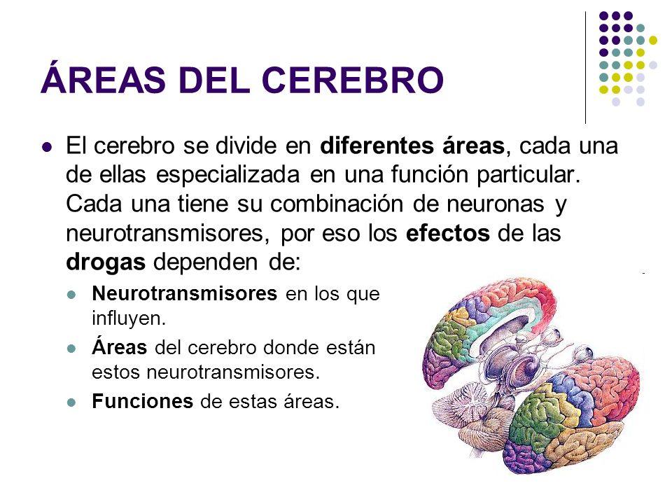 TIPOS DE DROGAS (CLASIFICACIÓN)
