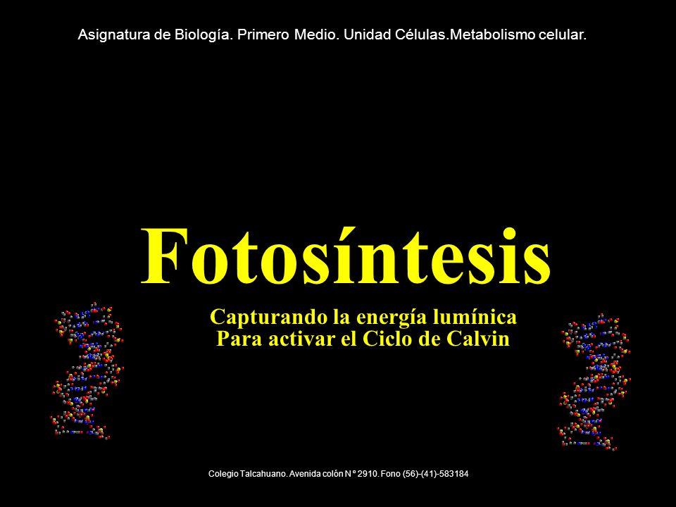FOTOSÍNTESIS Proceso por el cual algunos seres capturan energía luminica y la usan luego para fabricar su propio alimento.