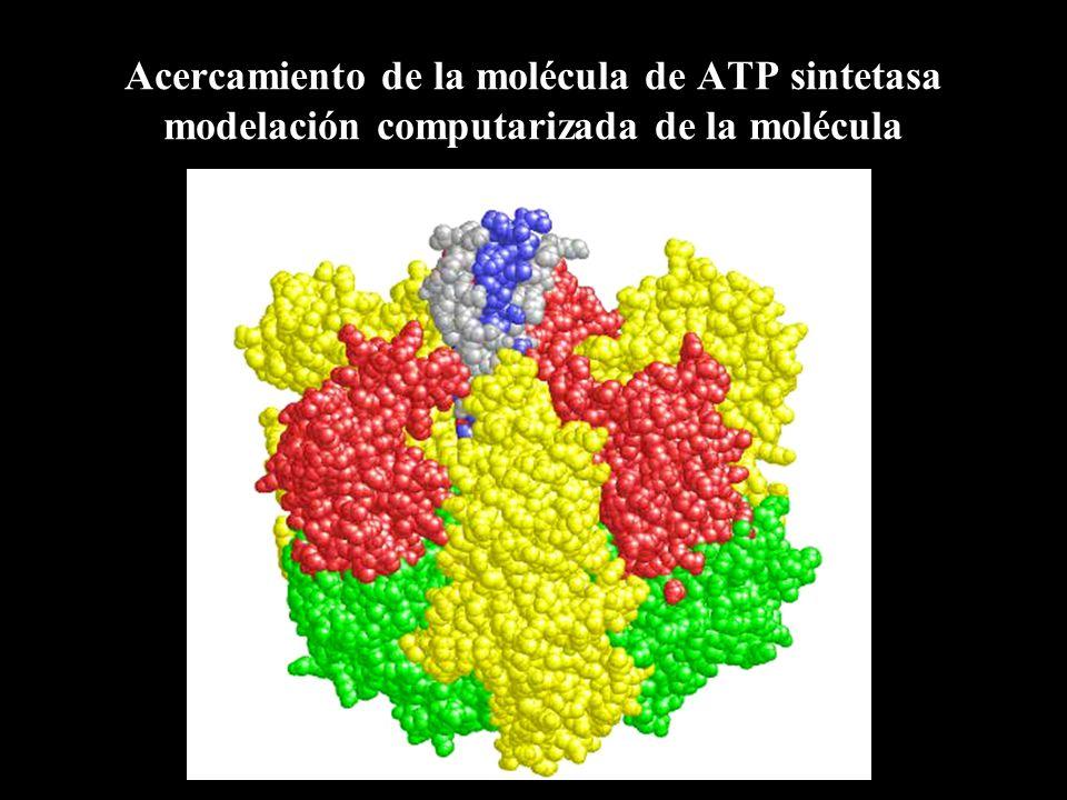 Los autótrofos fabrican su propio alimento utilizando energía lumínica Las plantas son los organismos más conocidos, pero también las algas, los protistas y las cianobacterias realizan fotosíntesis.