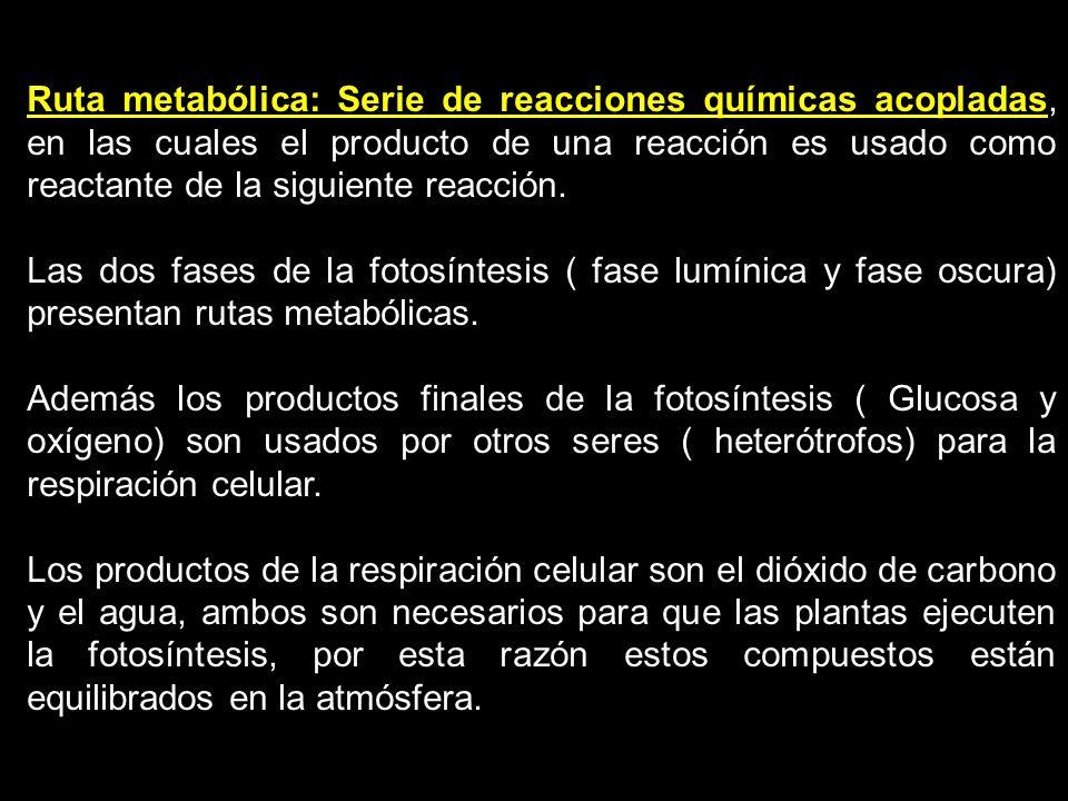 The Photosynthesis Reactions: 1.Reacciones lumínicas: Es el primer conjunto de reacciones de la fotosíntesis.