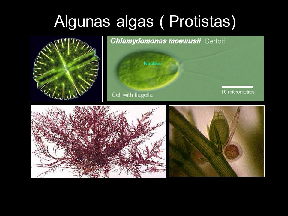 Las plantas superiores