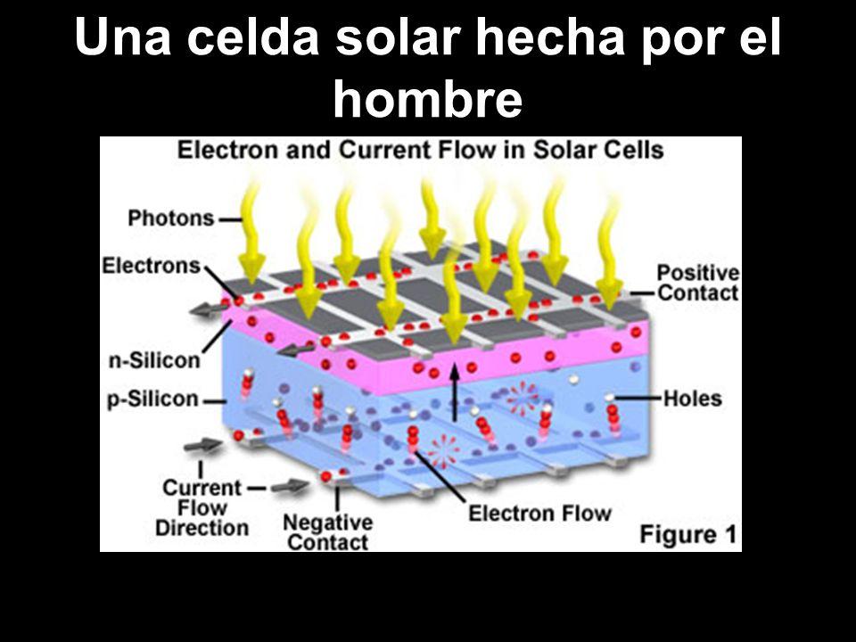La super celda solar de las plantas