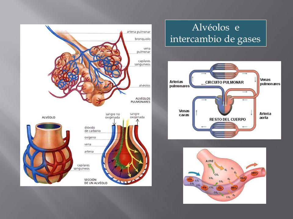 CO 2 O2O2 Vénula pulmonar Bronquíolo Pulmón normal Arteriola pulmonar Alvéolo