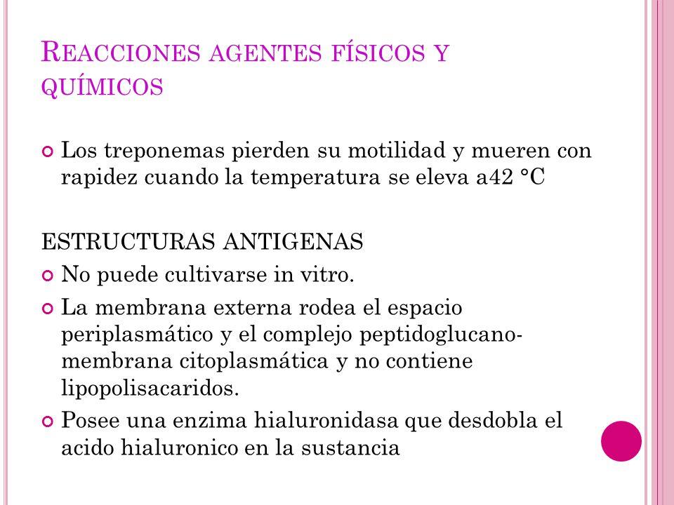 P ATOGENIA PATOLOGÍA Y DATOS CLÍNICOS SIFILIS ADQUIRIDA La infección natural con t.