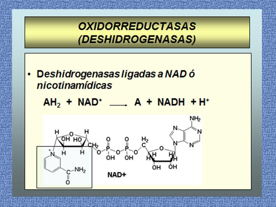 El sustrato oxidado pierde 2 hidrógenos, uno es captado por el NAD reduciéndose y el otro aparece como H+ en el medio.