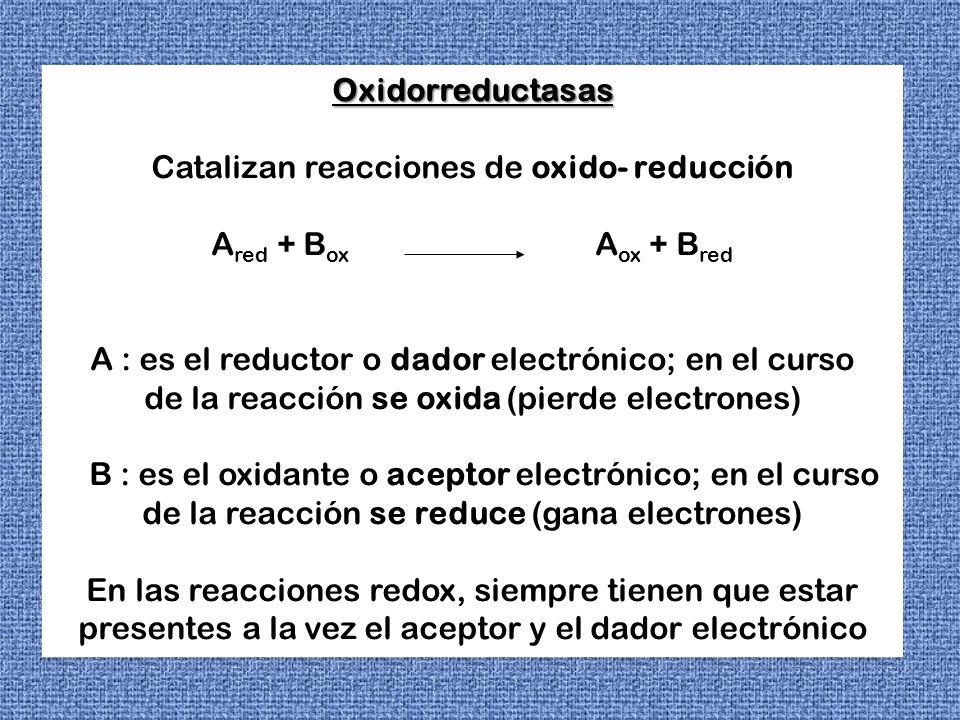 Estas reacciones son fuertemente exergónicas, en las cuales para evitar una liberación brusca de energía, no aprovechable por la célula, se libera en forma fraccionada.