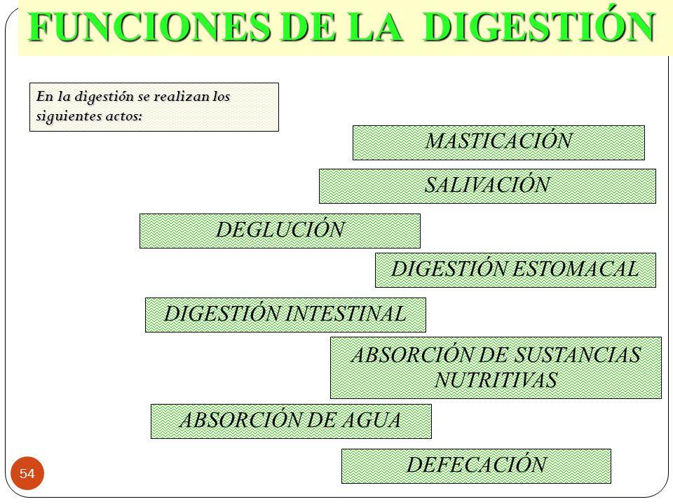 54 FUNCIONES DE LA DIGESTIÓN MASTICACIÓN SALIVACIÓN DEGLUCIÓN DIGESTIÓN ESTOMACAL DIGESTIÓN INTESTINAL ABSORCIÓN DE SUSTANCIAS NUTRITIVAS ABSORCIÓN DE AGUA DEFECACIÓN En la digestión se realizan los siguientes actos: