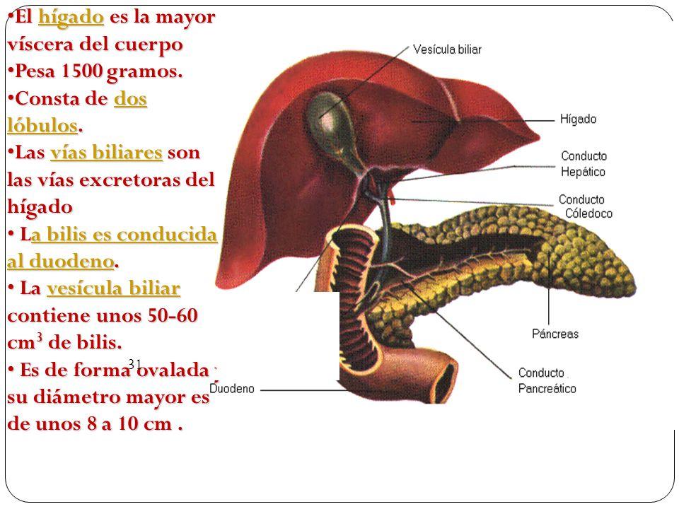 El hígado es la mayor víscera del cuerpoEl hígado es la mayor víscera del cuerpohígado Pesa 1500 gramos.Pesa 1500 gramos.
