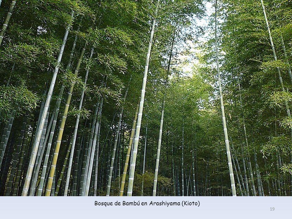Bosque de Bambú en Arashiyama (Kioto) 19