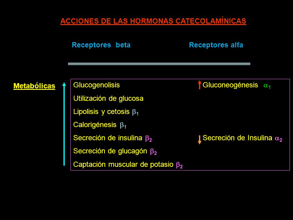Receptores betaReceptores alfa Contractilidad cardíaca 1 Frecuencia cardíaca 1 Velocidad de conducción 1 Dilatación arteriolar 2 vasocontricción arteriolar 1 (músculo)(esplácnica, renal, cutánea, genital) Presión arterial presión arterialCardiovasculares Relajación muscular 2 contracción de esfínteres 1 Gastrointestinalgastrointestinal Urinariourinario bronquial Viscerales Otras Sudoración (adrenérgica), dilatación pupilar, agregación plaquetaria 2..cont