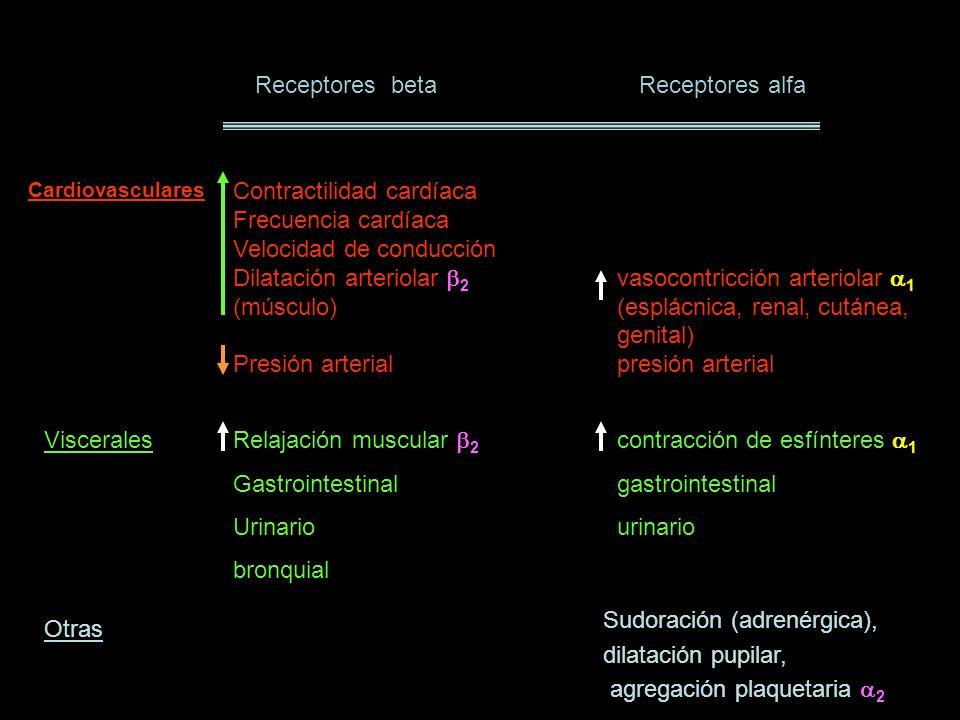 RECEPTORES DE CATECOLAMINAS Los receptores 1, 2 y 2 son glucoproteínas similares.