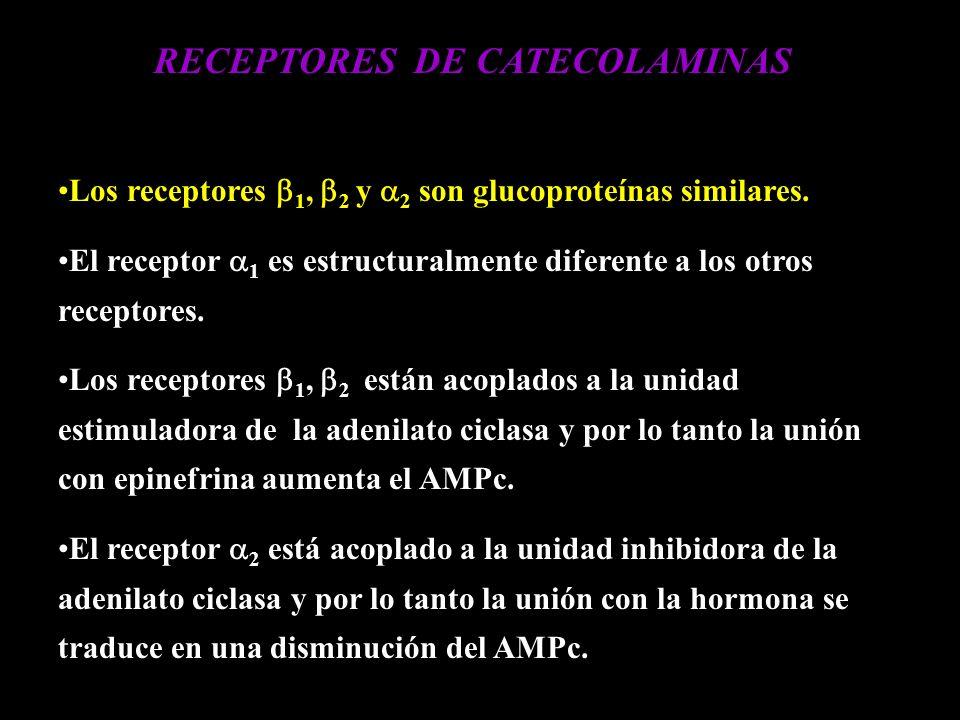 …cont El receptor 1 está acoplado a Calcio y a productos del fosfatidilinositol.