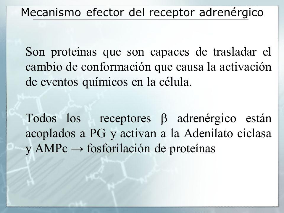 Receptores -adrenérgicos 1 receptor PGi inhibe la adenilatociclasa activa DAG PKc Activa fosfolipasa C la catálisis de PIP2 IP3 Ca contracción músculo liso