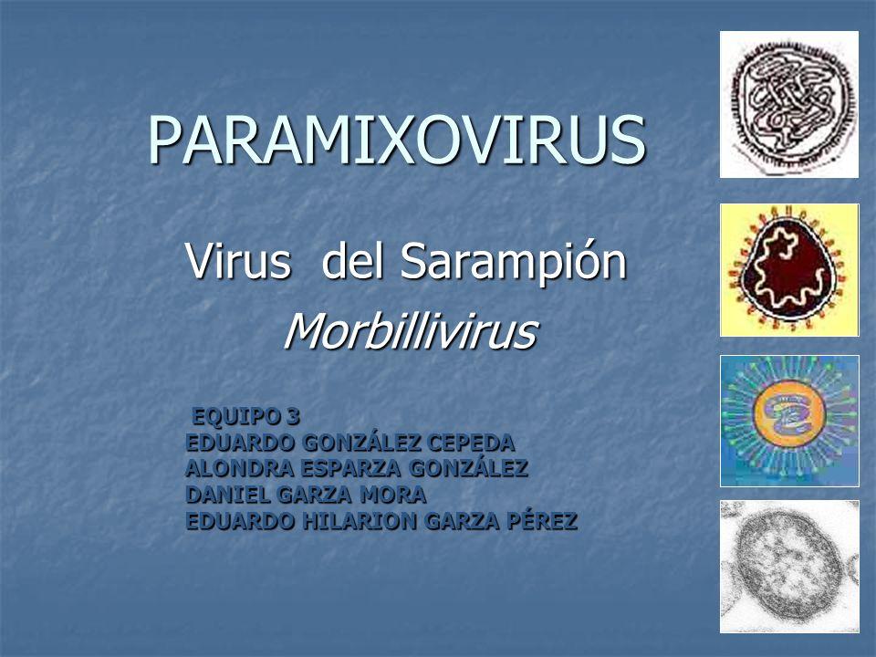 MORFOLOGÍA Familia: Paramixovirus Familia: Paramixovirus Género: Morbillivirus.