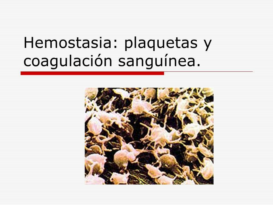 Hemostasia Procesos por los que se previene la pérdida de sangre Intervienen varios procesos: Espasmo vascular Formación del tapón plaquetario (trombo) Coagulación sanguínea