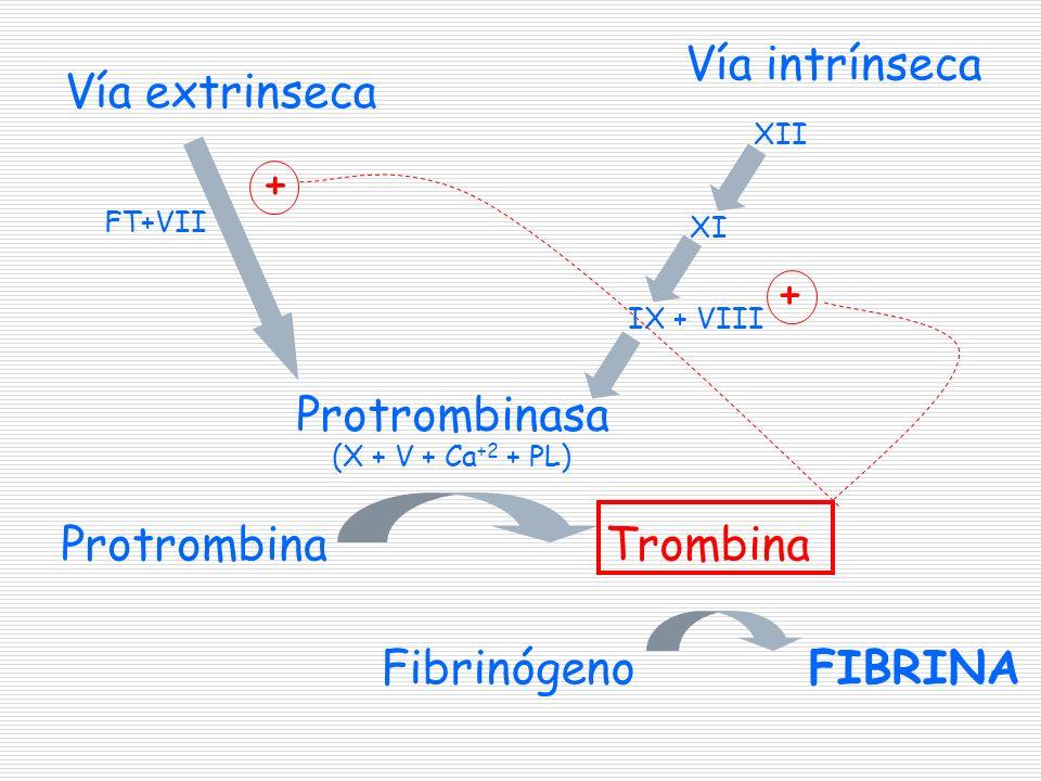 Fases de la coagulación Formación del complejo activador de la protrombina (protrombinasa) Vía extrínseca Vía intrínseca Formación de trombina Formación de fibrina
