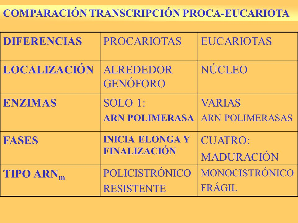 9.3.-RETROTRANSCRIPCIÓN Proceso excepcional.
