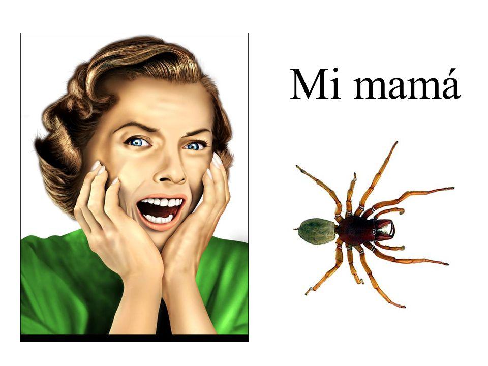 Mi mamá tiene miedo de las arañas.