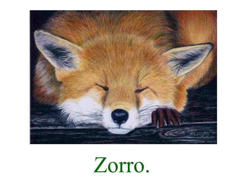 Zorro tiene sueño.