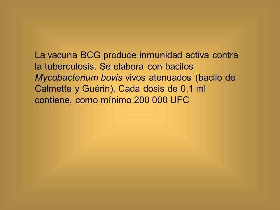 La vacuna BCG produce inmunidad activa contra la tuberculosis y disminuye la incidencia de la tuberculosis del sistema nervioso central.