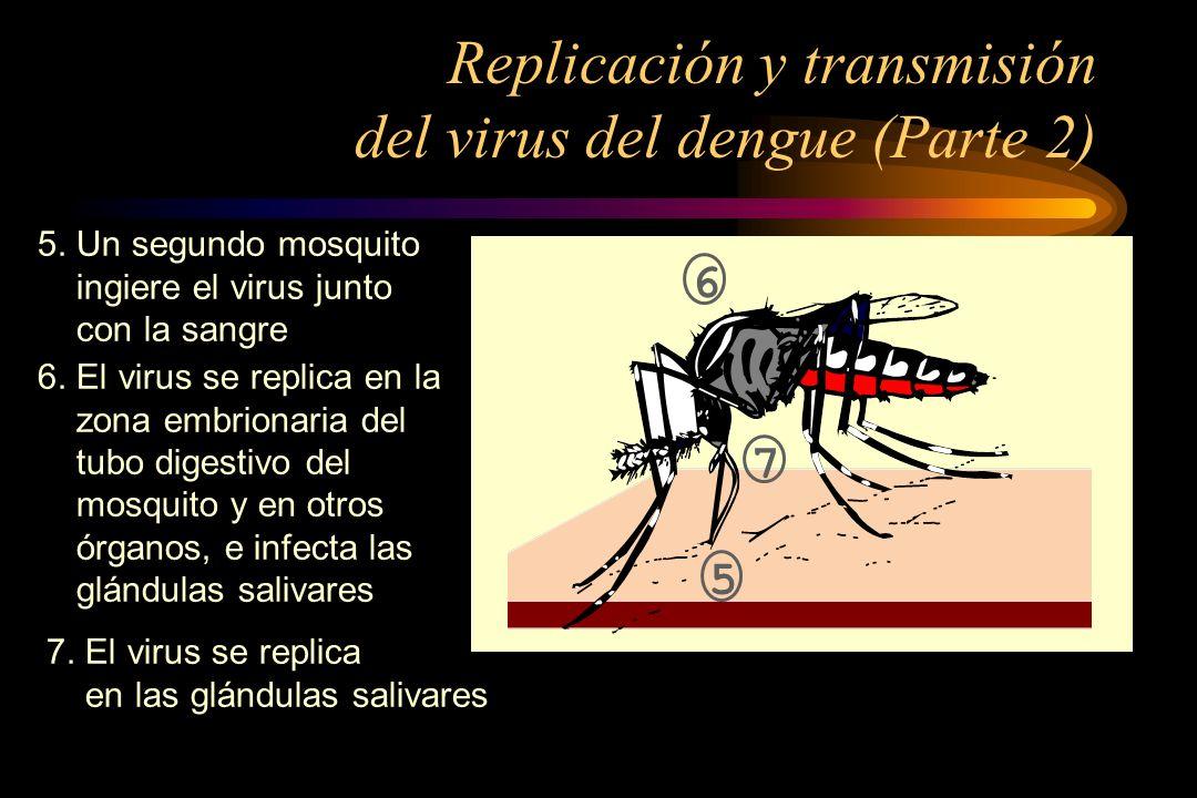 Asintomáticos o inaparentes Síndrome Febril Inespecífico Dengue Clásico FHD DC con manif.
