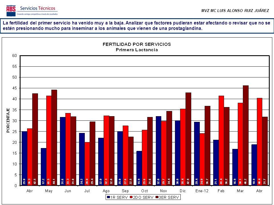 MVZ MC LUIS ALONSO RUIZ JUÁREZ Se observa la misma tendencia en vacas de dos o más lactancias aunque la diferencia en fertilidad es menor entre el 1er y segundo-tercer servicio.