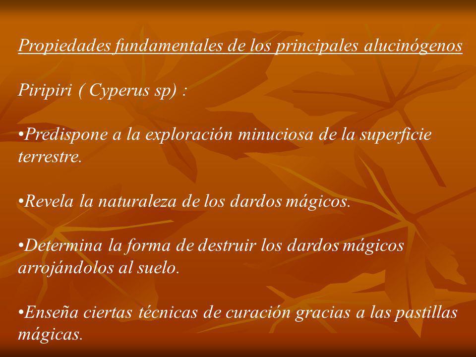 Ayahuasca ( Banisteriospsis caapi ): Transmite conocimiento en general.
