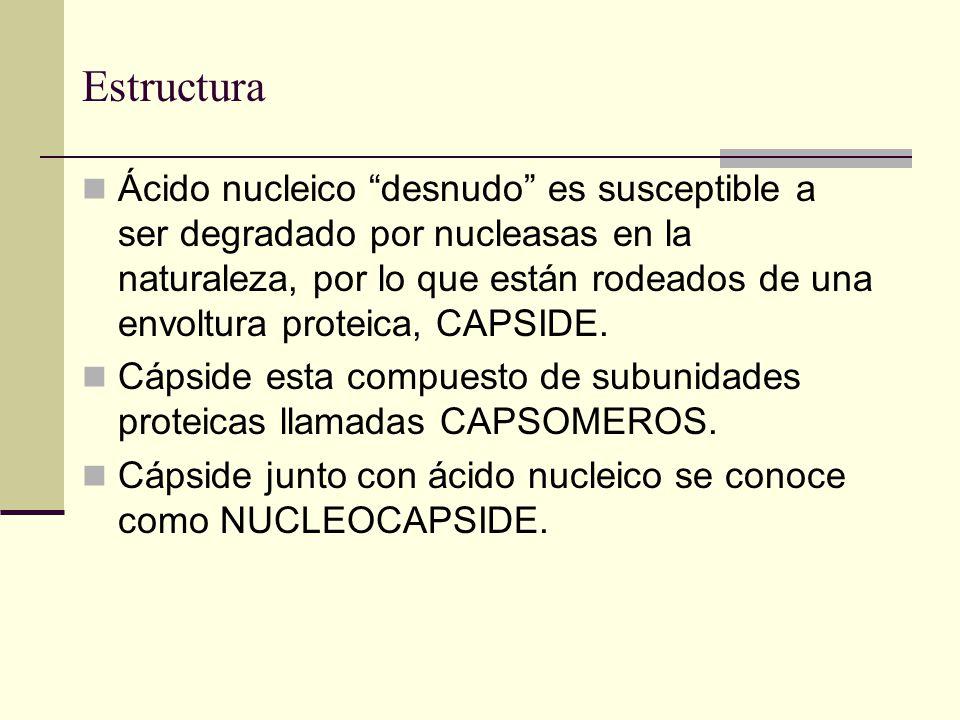 Ácido nucleico desnudo es susceptible a ser degradado por nucleasas en la naturaleza, por lo que están rodeados de una envoltura proteica, CAPSIDE.