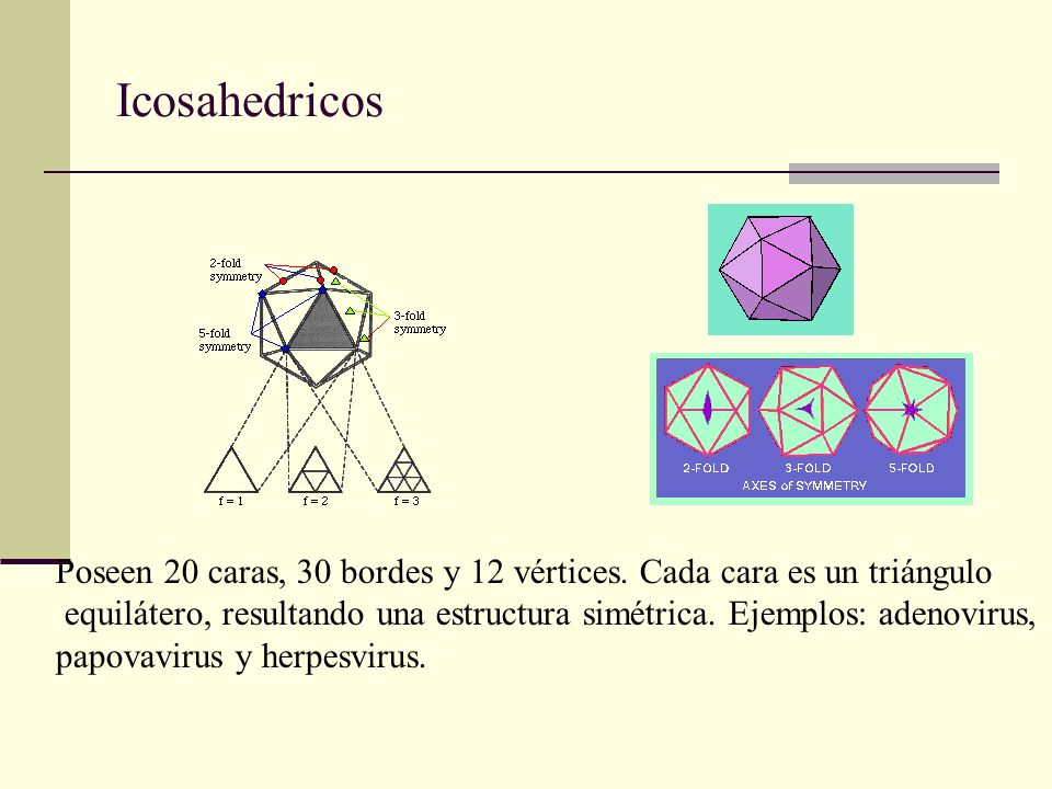 Icosahedricos Poseen 20 caras, 30 bordes y 12 vértices.