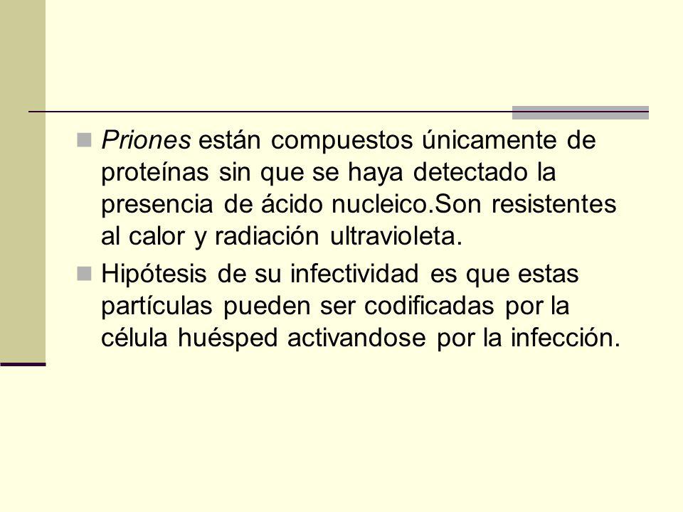 Priones están compuestos únicamente de proteínas sin que se haya detectado la presencia de ácido nucleico.Son resistentes al calor y radiación ultravioleta.