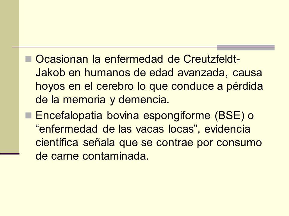 Ocasionan la enfermedad de Creutzfeldt- Jakob en humanos de edad avanzada, causa hoyos en el cerebro lo que conduce a pérdida de la memoria y demencia.