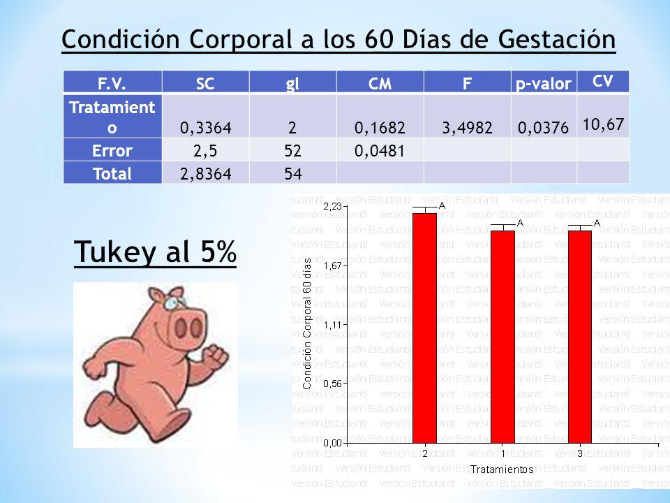 F.V.SCglCMFp-valorCV Tratamientos0,040620,02031,12270,33316,6661 Error0,9412520,0181 Total0,981854 En el ADEVA para la variable Condición Corporal a los 90 días, se observa que no existen diferencias significativas para los tratamientos, el CV de 6,6661 % es excelente para esta variable ya que está ajustado a la condición de hembras normales en la reproductiva en esta etapa empieza el desarrollo de la glándula mamaria y un exceso de proteína y energía impide su desarrollo, lo cual coincide con el trabajo de Diego Goñi et.