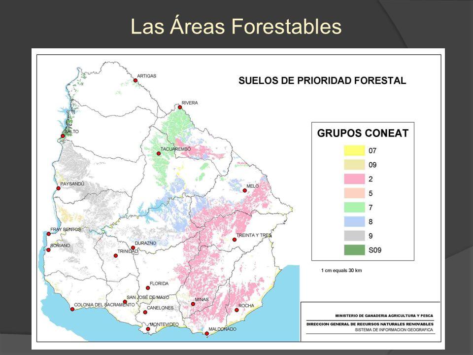 Las Áreas Forestadas en Suelos Forestales Forestaciones