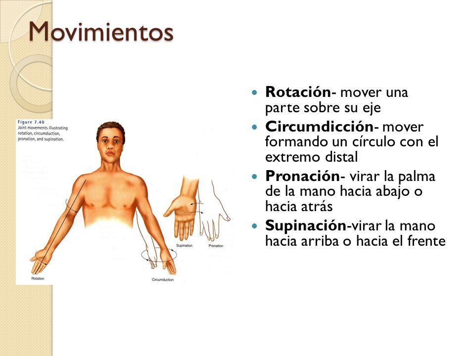 Movimientos Eversión- mover la planta del pie lateralmente Inversión- mover la planta del pie medialmente Protracción- mover una parte hacia el frente Retracción-mover una parte hacia atras Elevación- subir una parte Depresión- bajar una parte