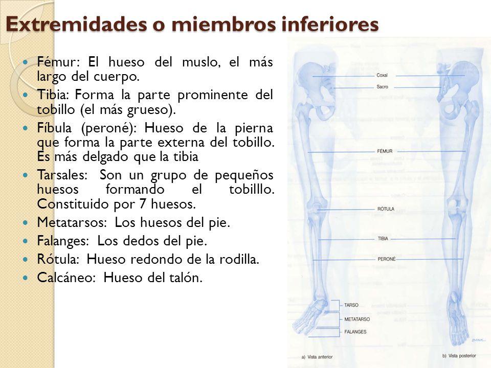 ARTICULACIONES Es el punto de unión entre dos o más huesos.