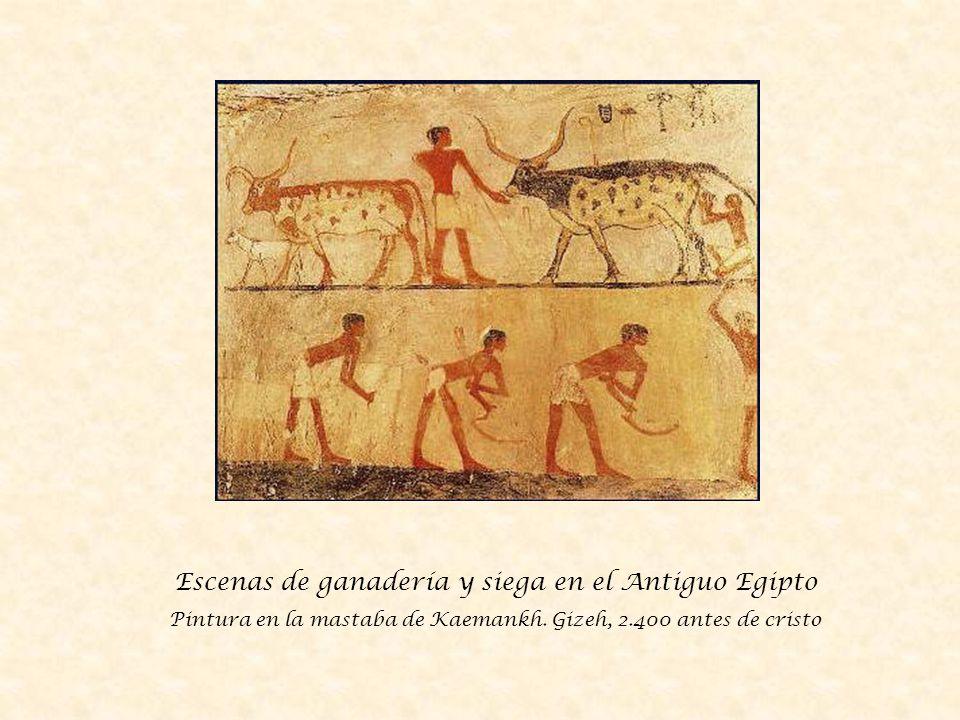 Campesinos egipcios vendimiando.Pintura de la tumba de Najt.