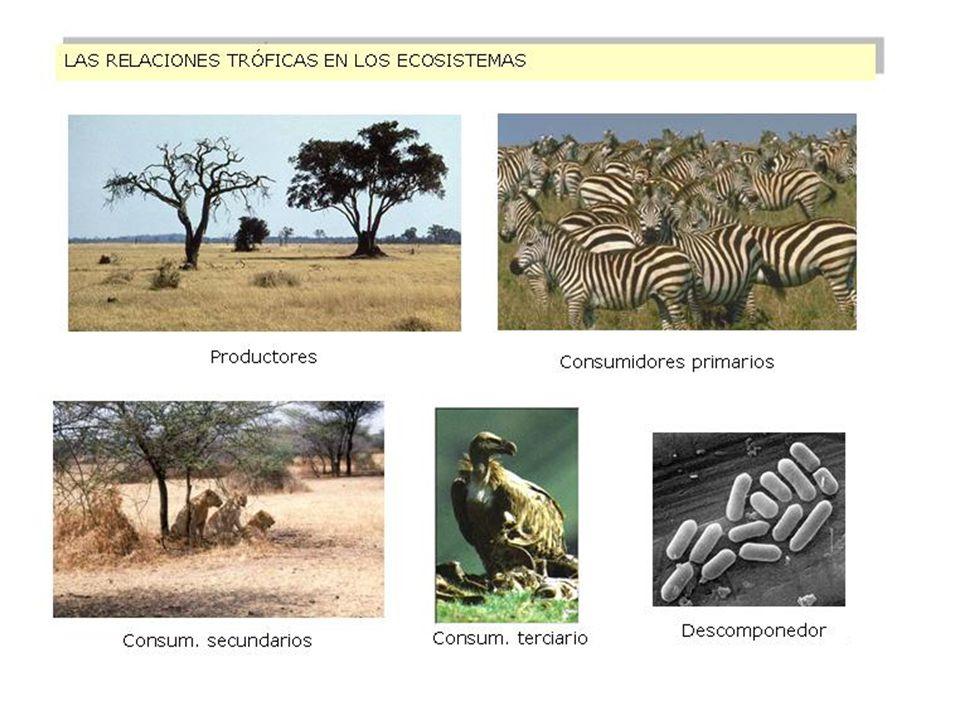 RELACIONES TRÓFICAS RED TRÓFICA Ecosistema marino