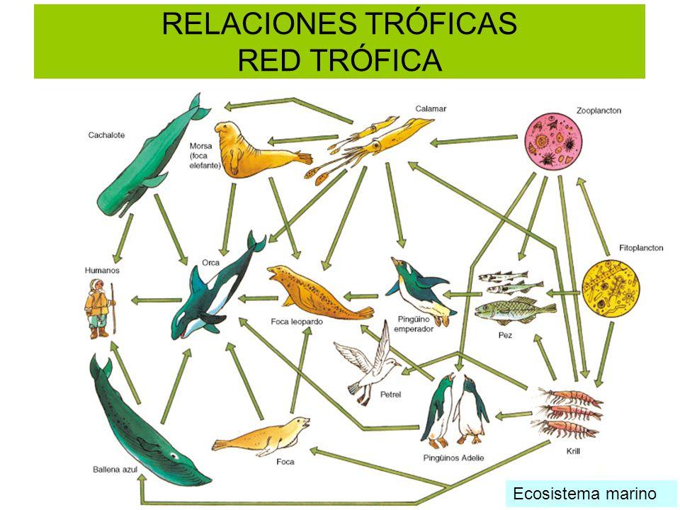 RELACIONES TRÓFICAS RED TRÓFICA Ecosistema terrestre