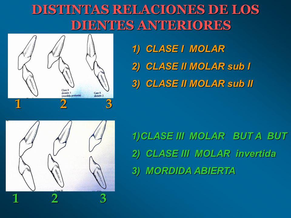 RELACIONES ESTÁTICAS: A) Alineación intraarcada: a) Curvas b) Planos c) Anatomía oclusal B) Alineación Interarcada: a) Relación normal b) Relación de los dientes posteriores c) Relaciones de los dientes anteriores RELACIONES DINÁMICAS