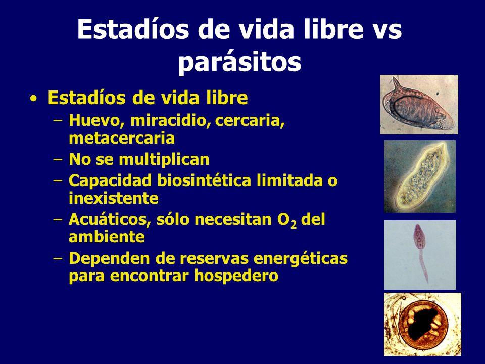 Estadíos de vida libre vs parásitos Estadíos parasitarios –Nutrientes abundantes –Reproducción –Evitar ser eliminados por el sistema inmune del huésped