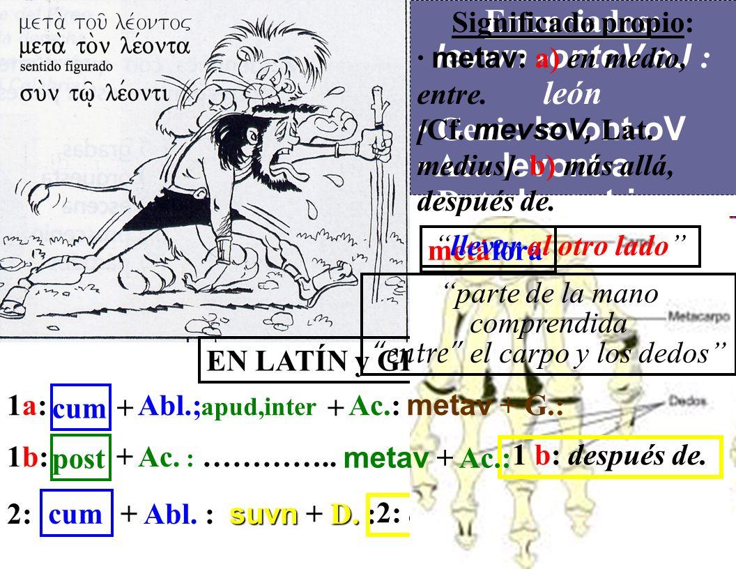Enunciados: levwn -ontoV oJ : león Geni.: levont-oV Ac.: levont-a Dat.: levont-i simbiosis Significado propio: · metav : a) en medio, entre.