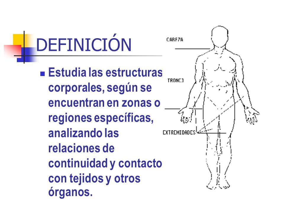 ANATOMÍA TOPOGRÁFICA ASPECTOS TECNICOS, son aquellos que permiten la orientación y análisis en la dinámica de las lesiones, destacándose entre ellos: 1.Posición anatómica, es la postura adoptada y reconocida universalmente para el estudio integral del cuerpo humano, sus relaciones orgánicas y del medio.