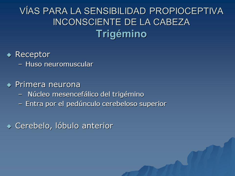 VÍAS PARA LA SENSIBILIDAD PROPIOCEPTIVA INCONSCIENTE DE LA CABEZA Trigémino