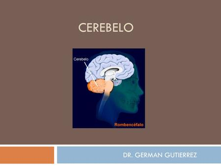 CEREBELO DR. GERMAN GUTIERREZ.