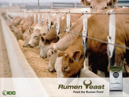 Feed the Rumen First!.