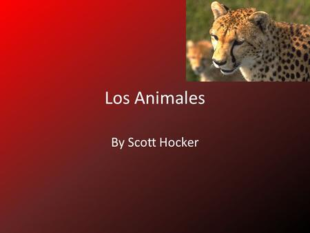 Los Animales By Scott Hocker.