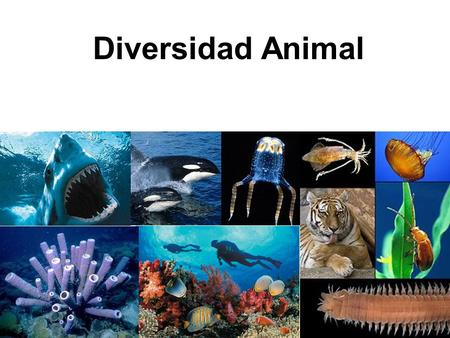 Diversidad Animal.