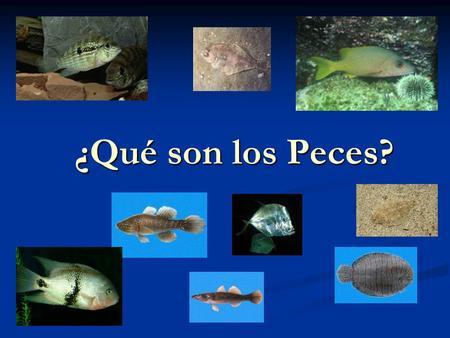 qu son los peces ppt video online descargar