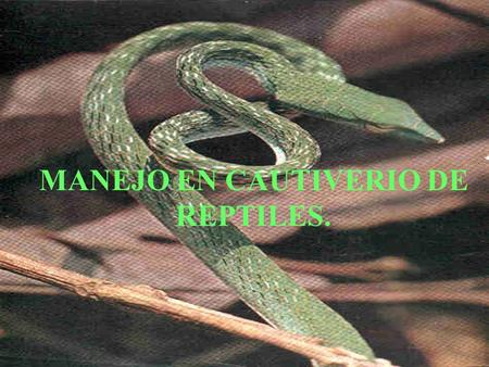 MANEJO EN CAUTIVERIO DE REPTILES.