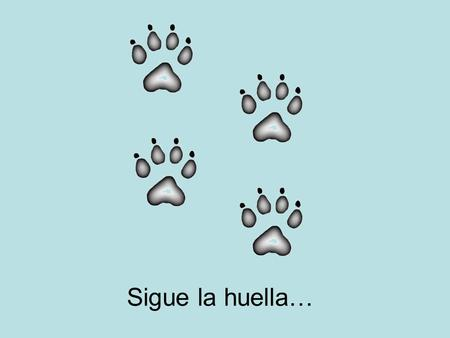 Sigue la huella….